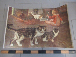School poster - domestic cat