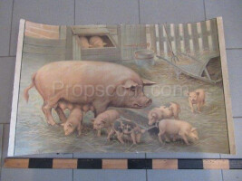 School poster - domestic pig