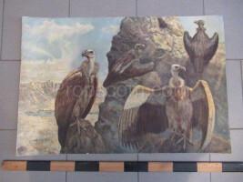 School poster - vultures